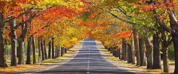 Macedon in Autumn